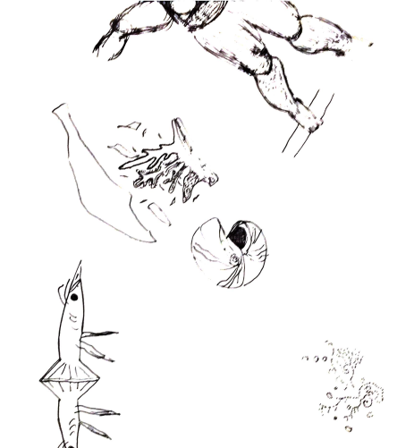 marine rocketbook sketches doodles with coral, sea creature and one sketch of a partial human body with legs and torso 4 oct 2017.png