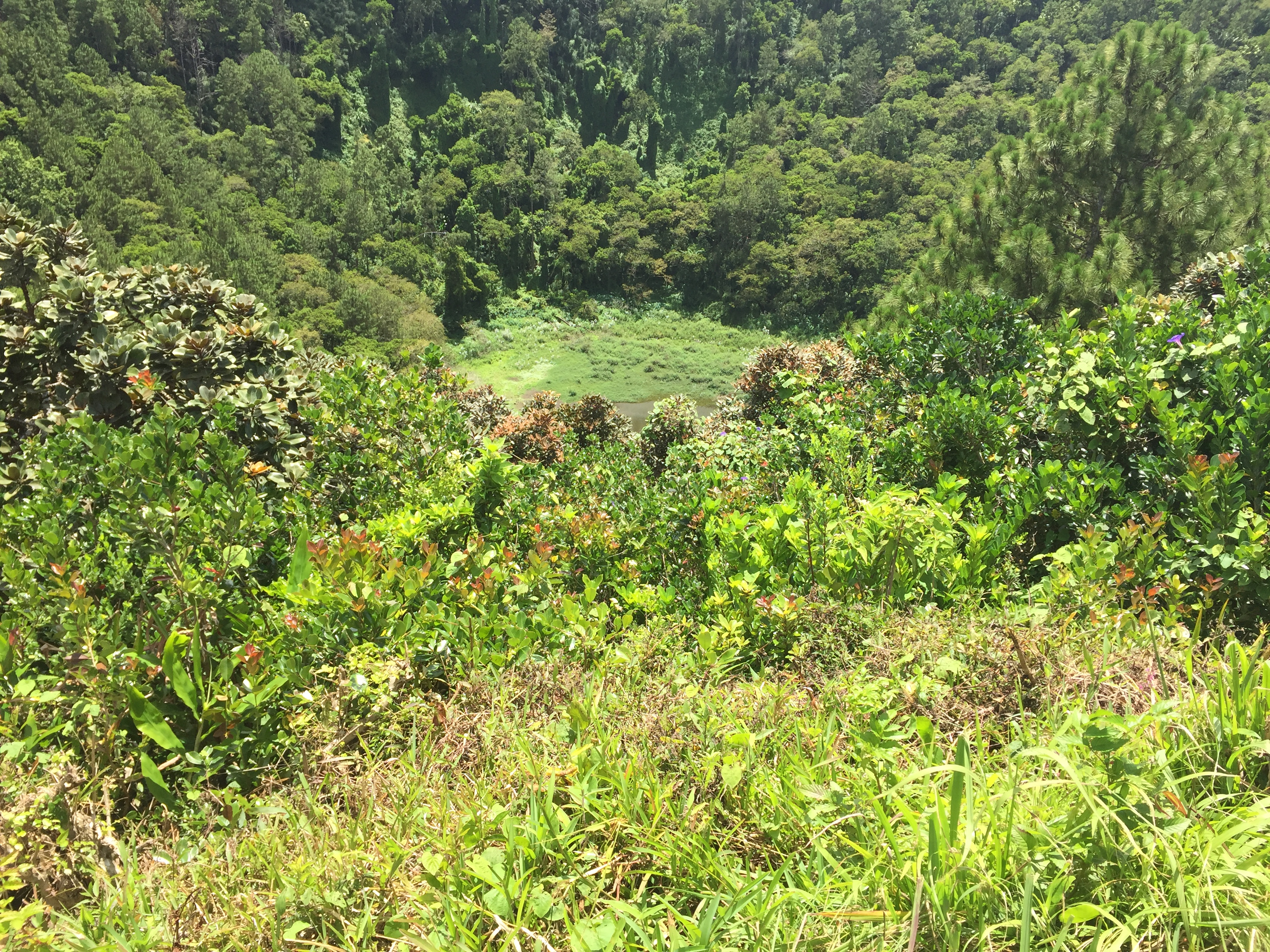 trou aux cerfs mauritius volcano volcanic crater covered in trees and other greenery in a lush tropical island setting